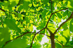 La mattina delle foglie Fotografia Stock Libera da Diritti