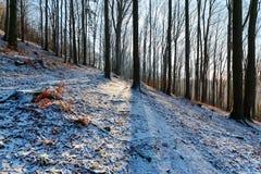 La mattina di inverno nel legno in montagne di Tatras Immagini Stock Libere da Diritti