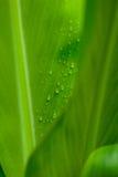 La mattina inumidice sui fiori tropicali immagine stock