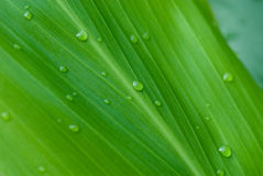 La mattina inumidice sui fiori tropicali immagine stock libera da diritti