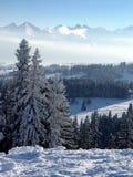 La mattina nevosa e gelida nella foresta di inverno nel mountai fotografia stock libera da diritti