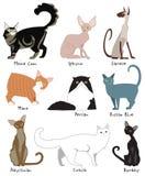 La mayoría de la Cat Breeds popular Fotografía de archivo