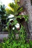 La mayoría de las orquídeas Imagen de archivo
