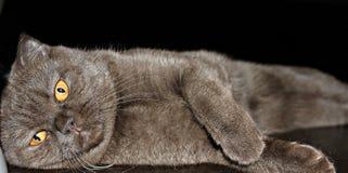 La mayoría del gatito del chocolate en el mundo imagenes de archivo