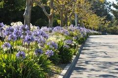 La mediana del boulevard ha i fiori ed alberi immagine stock libera da diritti