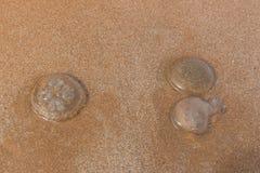 La medusa se sienta en la playa Fotografía de archivo