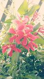 La meilleure photo de la fleur photographie stock
