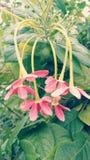 La meilleure photo de la fleur Photo libre de droits
