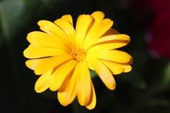 La mejor flor Flor del pétalo El blanco se levantó Fotos de archivo libres de regalías