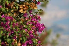 La mejor flor Flor del pétalo El blanco se levantó Fotos de archivo