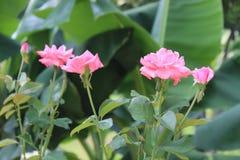 La mejor flor Flor del pétalo El blanco se levantó Imagen de archivo libre de regalías