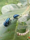 La mejor foto del insecto Imagen de archivo libre de regalías