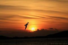 La mejor puesta del sol Imágenes de archivo libres de regalías
