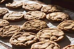 La melassa casalinga Sugar Cookies ha cotto di recente immagine stock libera da diritti