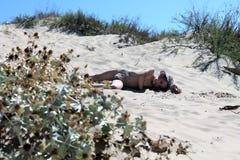 La mentira cansada del bebé hermoso en la arena y broncea y reclinación imagen de archivo