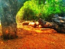 La mentira de los árboles redujo en la tierra y un árbol derecho Imagen de archivo libre de regalías