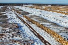 La mentira derribada de los árboles debajo del cielo abierto Tala de árboles en Rusia Destrucción de bosques en Siberia Cosecha d fotografía de archivo libre de regalías