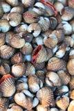 La mer écosse des palourdes en Thaïlande Photos libres de droits