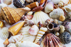 La mer écosse la collection sur le fond en bois blanc Photo stock
