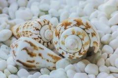la mer écosse trois Photo stock