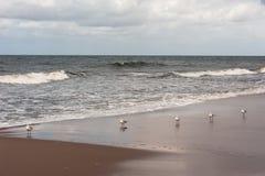 La mer baltique Images libres de droits