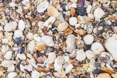 La mer ?cosse le fond Texture de coquille de mer images libres de droits