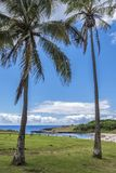 La mer d'Anakena entre les paumes photo libre de droits