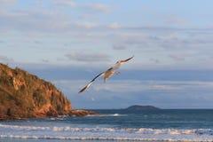 La mer de mouette de vol de fond ondule le ciel bleu Photos libres de droits