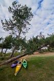 La mer kayaks prêt à être employé à la mer derrière des pins Images stock