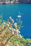 La mer Méditerranée bleue Photos stock