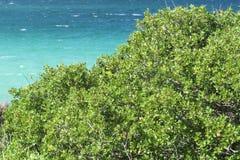 La mer la plus bleue jamais Fleurs pourpres Vourvourou La Grèce photo libre de droits