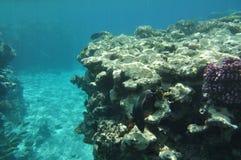 La Mer Rouge -5 Photo libre de droits