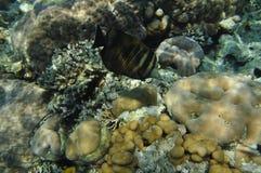 La Mer Rouge -3 Images libres de droits