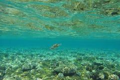 La Mer Rouge -1 Photos libres de droits