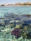 La Mer Rouge, Egypte Photo stock