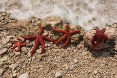 La Mer Rouge se tient le premier rôle sur le bord de la mer, pendant l'été photo stock