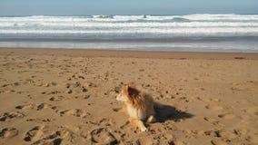 La mer vient à readhear image stock