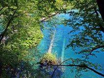 La meraviglia di Plitvice Fotografie Stock Libere da Diritti