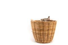 La merce nel carrello del gatto, sguardo fuori, ha isolato il fondo bianco Fotografia Stock