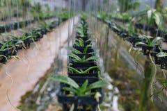 La merce nel carrello delle piantine delle orchidee nella serra della scuola materna fotografie stock libere da diritti