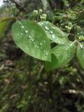 La merveille de la nature Photo stock