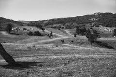 La meseta de la montaña de Ai-Petri y las siluetas de la gente a caballo en la distancia, bw Foto de archivo