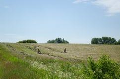 La metà degli uomini si è spogliata il fieno manuale del rastrello nel campo rurale Immagini Stock Libere da Diritti