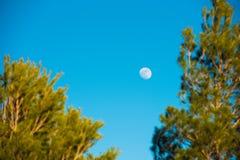 La mezza luna compare nel tempo di pomeriggio nel cielo con il ramo dell'albero alla priorità alta, Tarragona, Catalunya, Spagna  Fotografia Stock