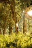 La mia foresta Immagini Stock