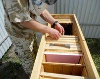 La miel, abeja Foto de archivo libre de regalías