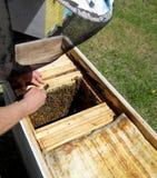 La miel, abeja Imagen de archivo
