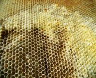 La miel, abeja Imagenes de archivo