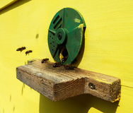 La miel, abeja Foto de archivo