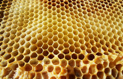 La miel, abeja Fotos de archivo